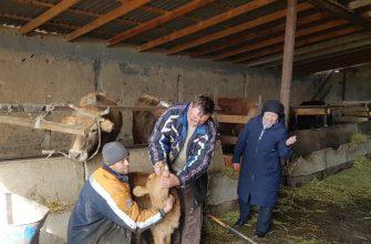 Семейная ферма – общая забота