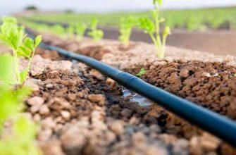 Главная проблема аграриев решается без господдержки