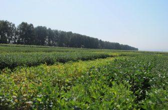 Растет бюджетная поддержка аграриев Востока