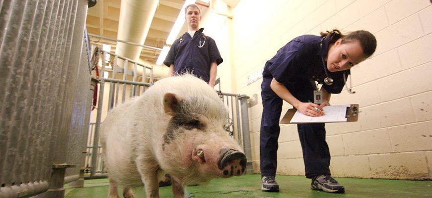 Ветеринаров могут сделать госслужащими