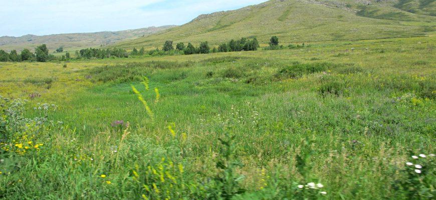 На Востоке у нерадивых хозяев изъяли 12 тысяч га земли