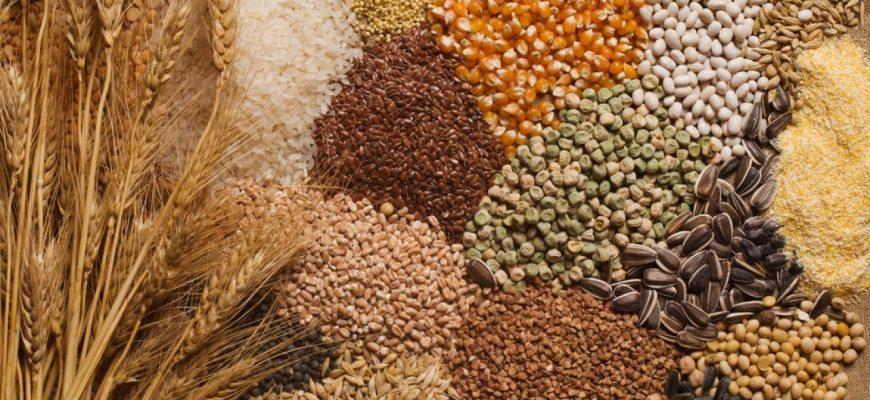 Кондиционные семена – залог урожая