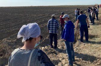Кызылординцам выделяют огороды