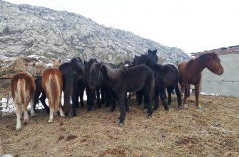 На Востоке крадут настоящий скот, мнимый и железных коней