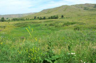 В Семее изъяли землю у нерадивых фермеров и садоводов