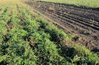 Закон о земле в пользу аграриев