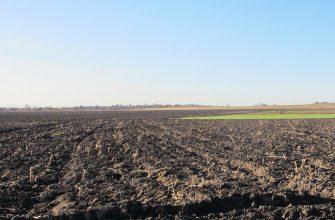 В Семее выросли площади под зерновыми и картофелем