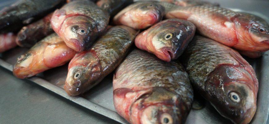 Рыбный день не отменяется