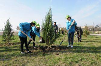 Площадь зеленых насаждений увеличивается, но не все деревья приживаются