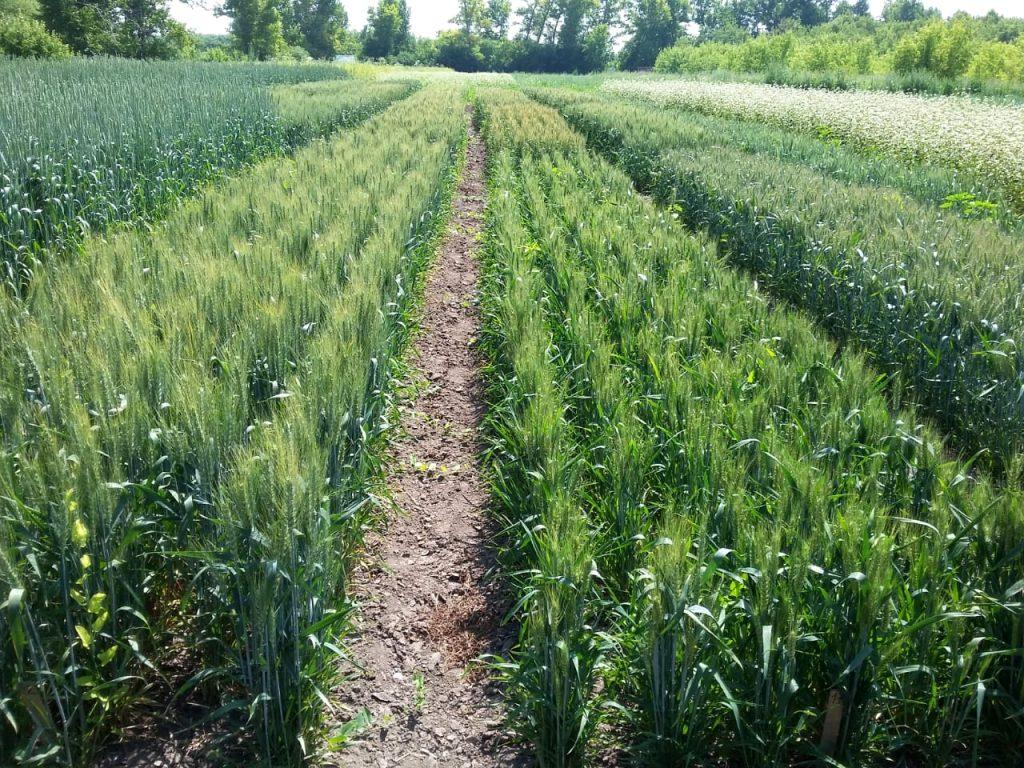 На Востоке работают над переходом к органическому земледелию