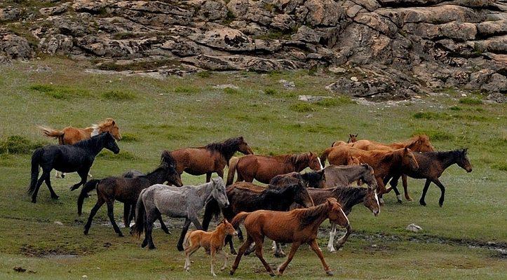 У одних скот в бегах, у других воруют из загона