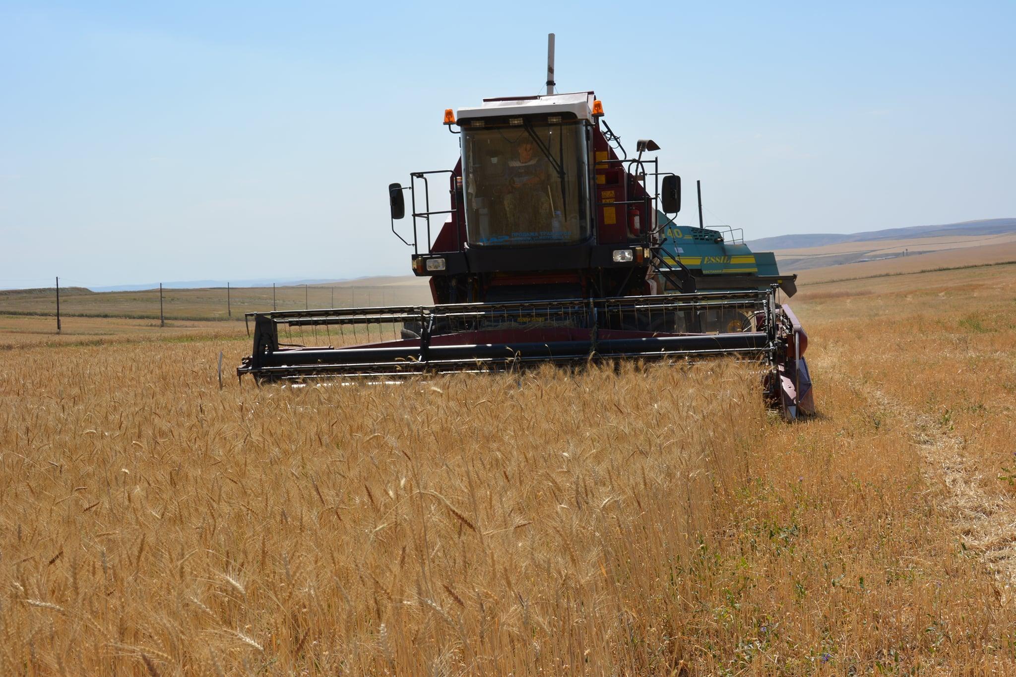 В РФ намолотили 100 млн тонн зерна