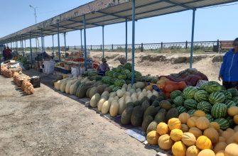 Чиновники в Кызылорде решили оставить бахчеводов без туалета