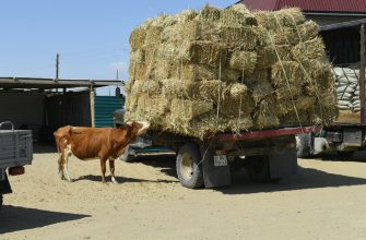 Карашукеев посетил пострадавшие от засухи районы в Кызылординской области