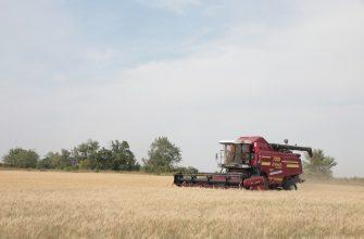 В Смоленской области рассчитывают собрать на 10% больше зерна