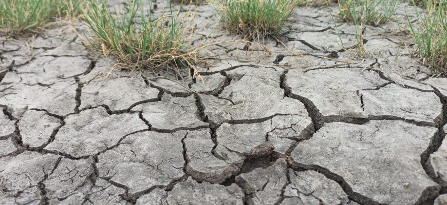 Сколько зерна потерял Казахстан из-за засухи?