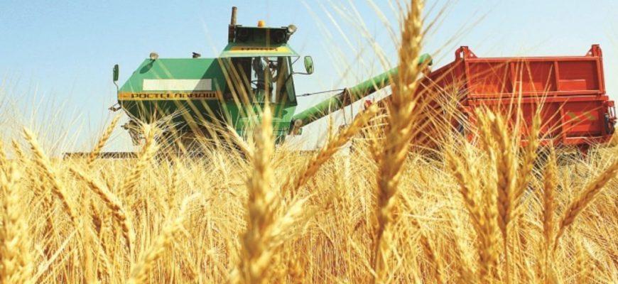 Уборка обеспечена на 64,2%, в бункера засыпано 270,1 тыс. тонн зерна
