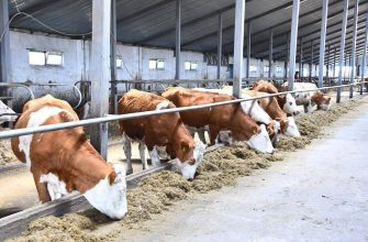 Молочно-товарные фермы на передовой животноводства