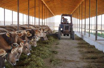 Палата молочных и смешанных пород КРС посетила Жамбылских фермеров