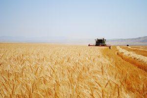 Урожай собрали, корма запасли