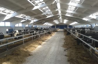На Востоке заработала откормочная площадка на 1000 голов скота