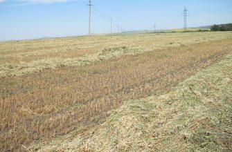 На Востоке скошены первые 14 тысяч га зерновых