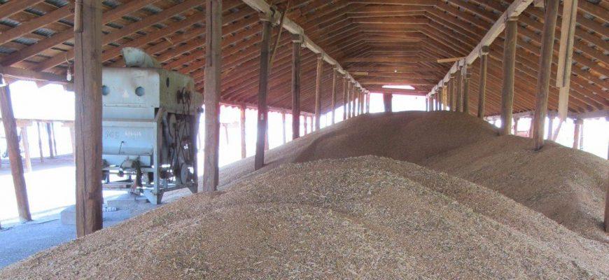 На Востоке намолотили первые 36 тыс. тонн зерна нового урожая