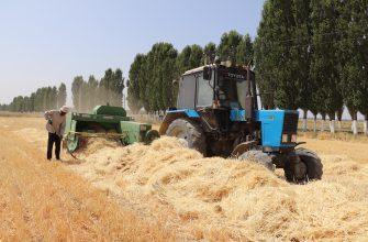Несмотря на засуху, собрали хороший урожай