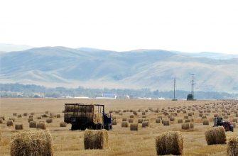 Востоку требуется 10 млрд тенге на удешевление кормов