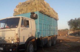 Кызылординские фермеры продолжают заготавливать корма