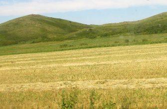 На Востоке урожайность культур внушает оптимизм