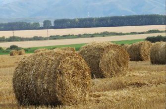 На Востоке заготовлено 66% сенажа
