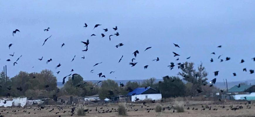 Животные и птицы вредят фермерам