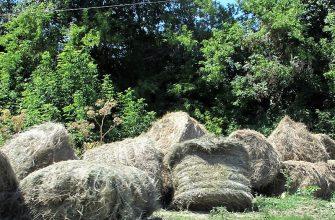 На Востоке растут запасы сена и сенажа