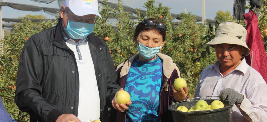 Фермеры региона собирают урожай